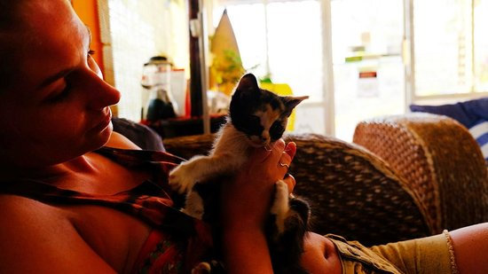 Maracuya Hostel: guests love cats!