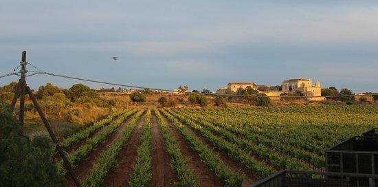 Baglio Oneto Resort and Wines: Vue depuis la chambre
