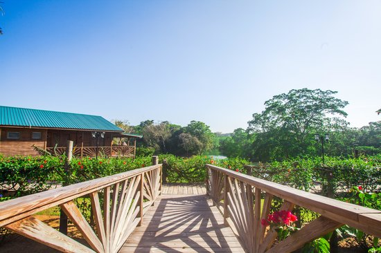 Dream Valley Jungle Lodge : Views