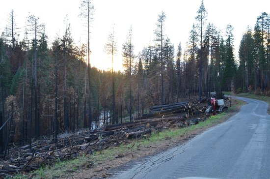 Evergreen Lodge at Yosemite: Logging operation just before you enter Evergreen Lodge