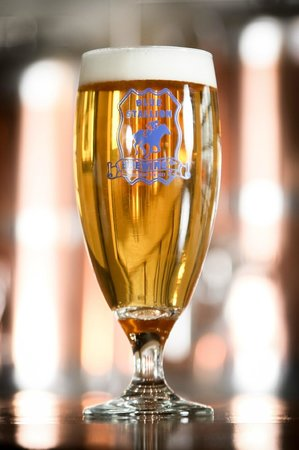 Blue Stallion Brewing Company: The German Pilsner in a fluted glass.