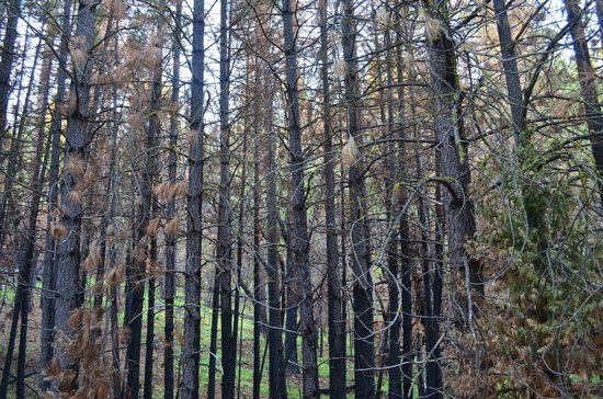 Evergreen Lodge at Yosemite: More fire damage