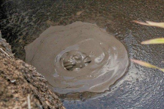 Bubbling mud at Kuirau Park