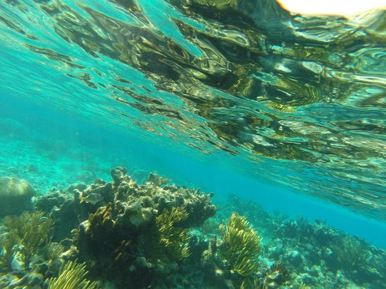 White Sand Water Sports : Reef snorkeling
