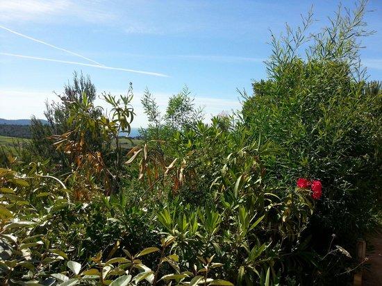 Le Parc des Chênes : Vue de la terrasse