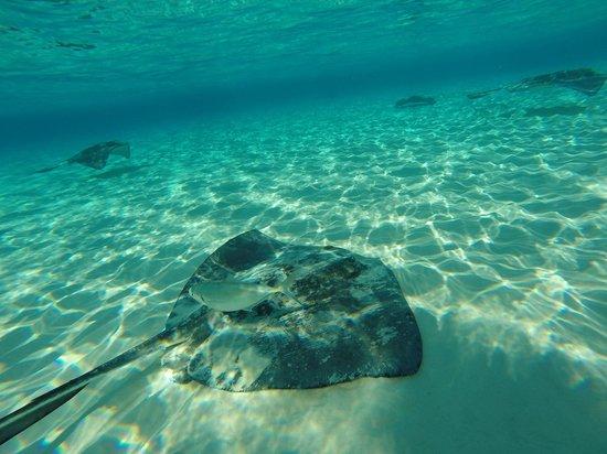 White Sand Water Sports : Stingrays