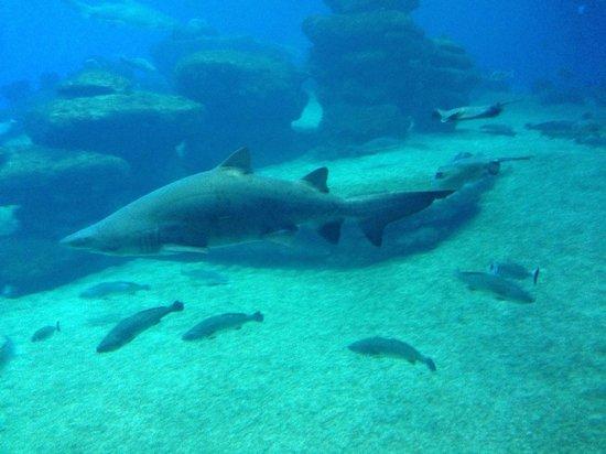 Palma Aquarium : Sharks