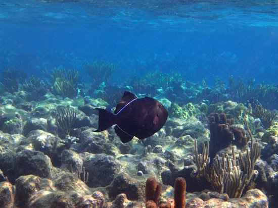 White Sand Water Sports: Triggerfish at the reef