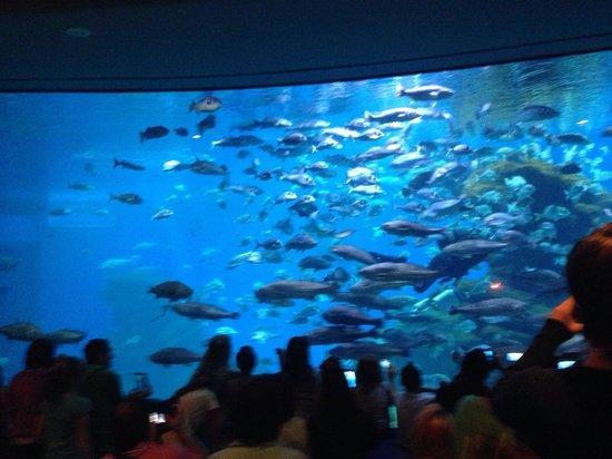 Palma Aquarium : Dinner time