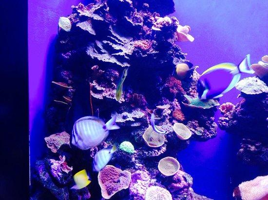 Palma Aquarium : Beautiful