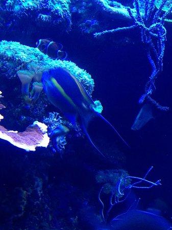 Palma Aquarium : Under the sea