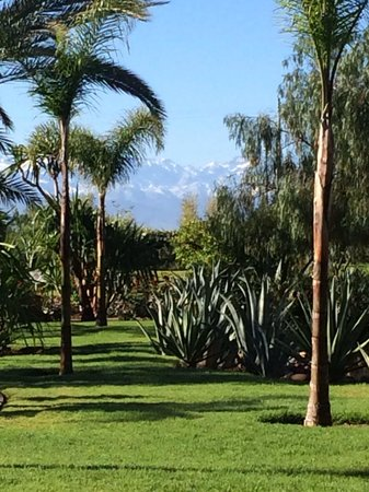 ClubHotel Riu Tikida Palmeraie : Hotel grounds, Atlas Mountains in the background