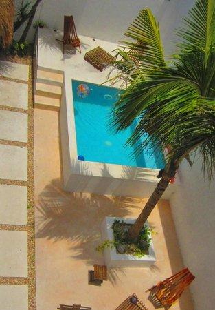 Hotel Latino: plunge pool