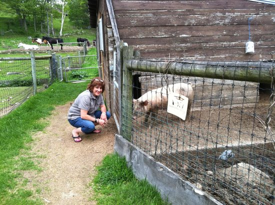 The Inn at East Hill Farm: Sharing some down time with the pig family