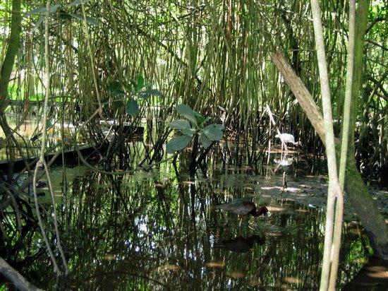 Flamingo Gardens: Everglades Sumpfgelände