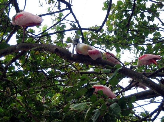 Flamingo Gardens: Freifluggelände