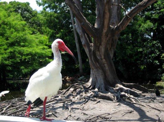 Flamingo Gardens: Brutstätte für zahlreiche Vogelarten
