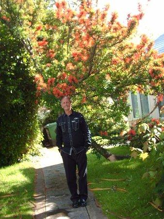 Medehamstede Hotel: lovely tree on the grounds
