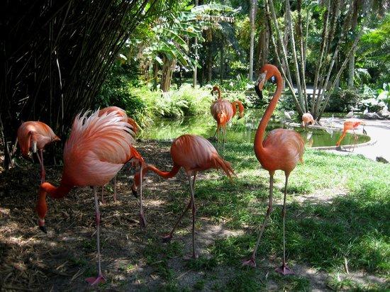 Flamingo Gardens: Flamingos - die Namensgeber der Anlage