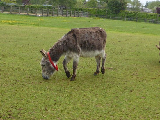 The Donkey Sanctuary: our adopted donkey