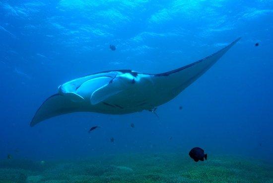 Manta Ray Bay Resort: Manta Ray