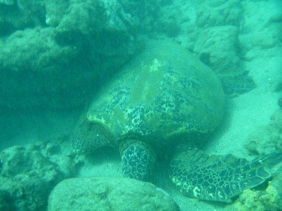 Seasport Divers: Turtle