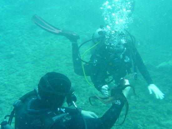 Seasport Divers: Bay Octopus