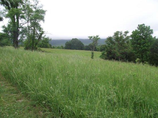 Fisher's Hill: Battlefield View