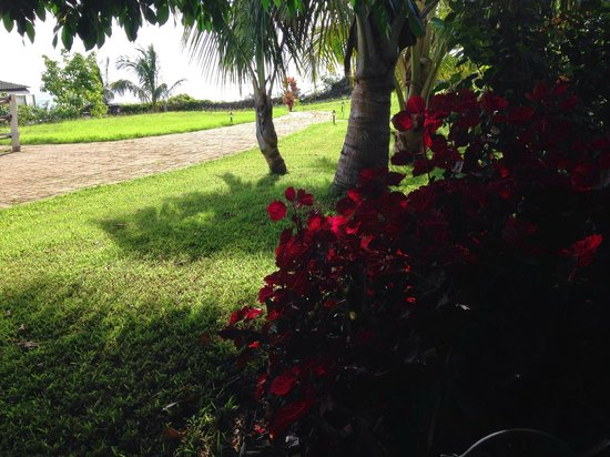 Cabanas Pikera Uri: Jardim