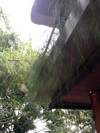 RedDoor Bali: balcony