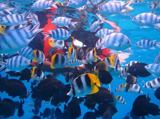 Bora Bora Photo Lagoon : Snorkeling in the coral gardens