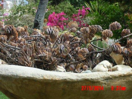 Hidden Eden Aruba: Frente de la posada