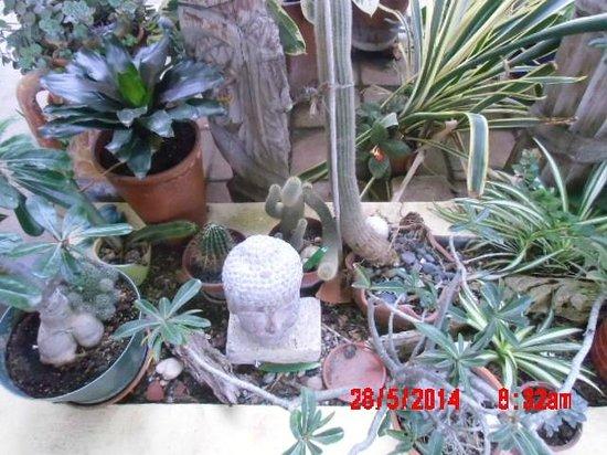 Hidden Eden Aruba: Jardin