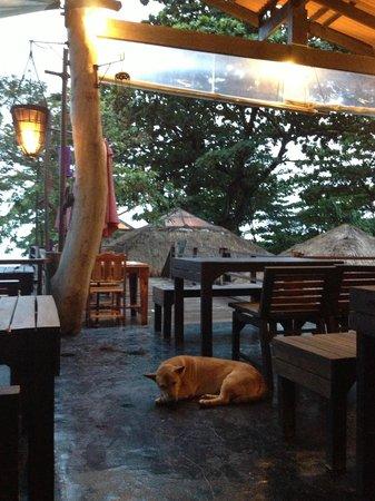 LaLaanta Hideaway Resort: Pup friends