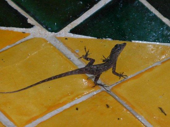 Nah Uxibal Villa and Casitas: Gecko in our shower...pretty darn cute !
