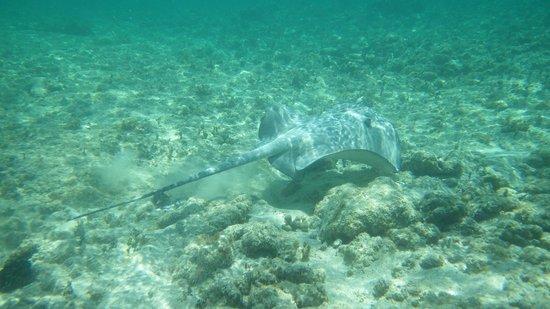 Nah Uxibal Villa and Casitas: Snorkeling in Soliman bay