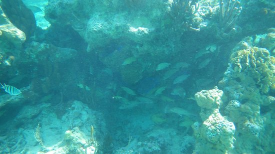 Nah Uxibal Villa and Casitas: Snorkeling in Soliman bay