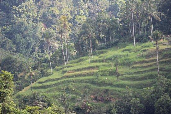 Ayung Resort Ubud: Terraces