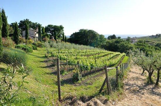 Agriturismo La Casella: Panorama 2
