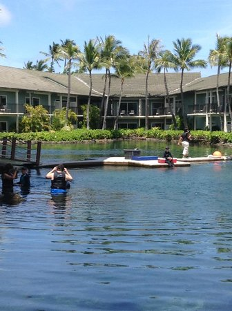The Kahala Hotel & Resort: ラグーン