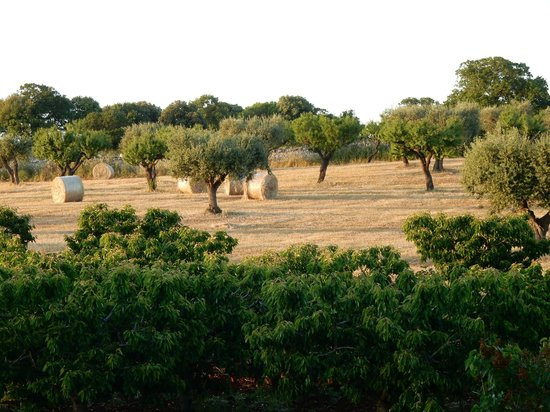 Agriturismo Masseria Aprile : The fields of hay
