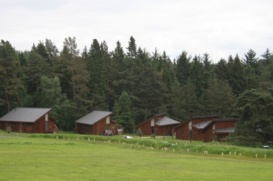 Forest Holidays Cropton, North Yorkshire: View of site