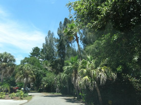 Siesta Key Village: checking out residential area