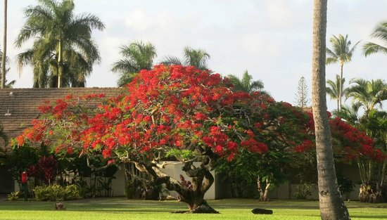 Travaasa Hana, Maui: beautiful tree