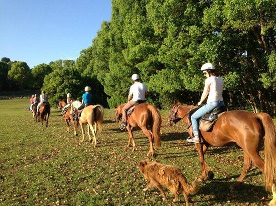 Pegasus Park Equestrian Centre