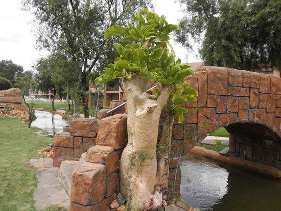WJardins e lagos no Windhoek Country Club Resort-Namíbia
