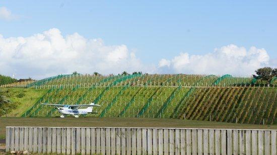 Flight Hauraki: Nice