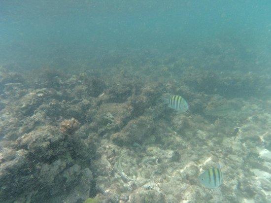 Viva Wyndham Dominicus Beach: SNORKEL