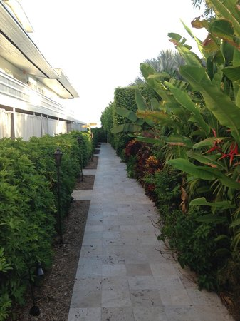 The Standard, Miami: pathway to rooms