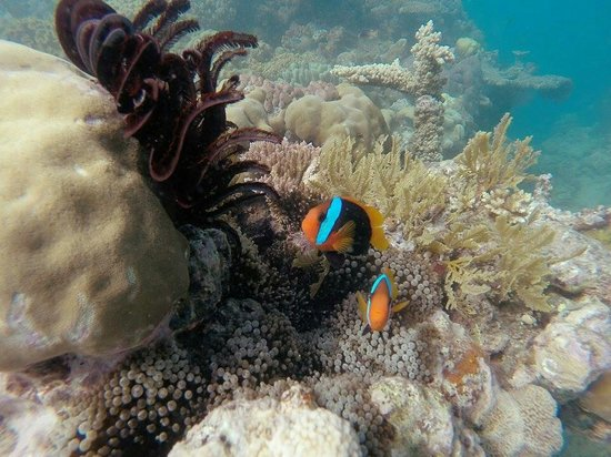 Passions of Paradise Reef Tour: Nice spot to dive